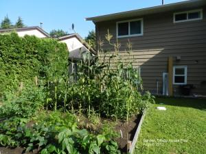 T-4 garden mid summer